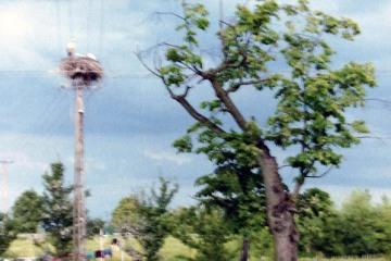 Skandawa 22.06.1993