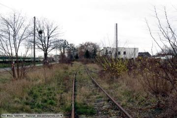 Nie używane tory bocznicy do wikliny i G.S w dniu 23.10.2009. Widok od strony bocznicy z G.S. ów. Po prawej odgałęzienie do wikliny, dalej prosto do nie istniejącej rzeźni - był tak krótki odcinek zakończony kozłem oporowym. W lewo bocznica dołączała do reszty torowiska.