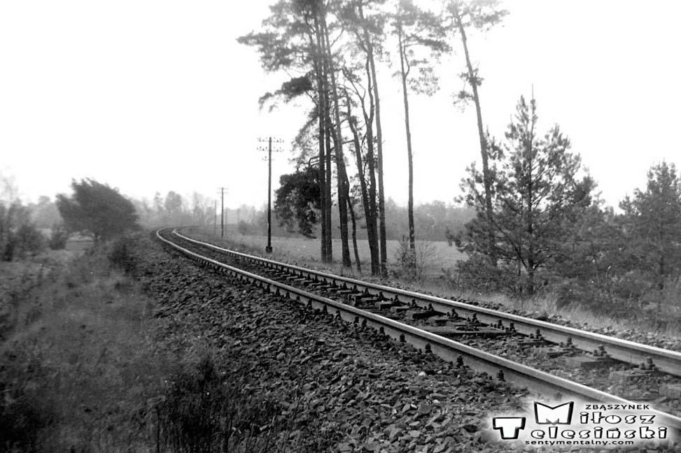 Widok od strony Dąbrówki Wlkp. (Międzyrzecza). Od zakrętu w prawo zaczyna się położony w 1930 roku tor prowadzący do Zbąszynka. W latach 1885 - 1920, tor biegł cały czas prosto, zmierzając do Zbąszynia - potem lekko w lewo, od tego miejsca 5 km.